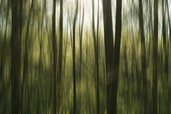 Greeen abstract forest. Abstract background Stock Photo