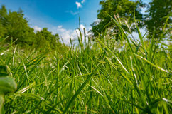 Greeen park grass Royalty Free Stock Images
