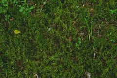 Greeen soft moss. Greeen soft fresh forest moss natural background Stock Photography