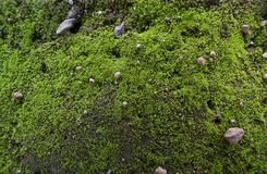 greeen soil moss royalty free stock photos