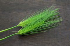 Greeen wheat on the wooden board Royalty Free Stock Photography