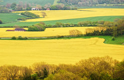 Greeen and yellow agricultural fields Stock Photo