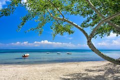 Greek beach on the island of Corfu in the mediterranean. Greek beach on the island of Corfu Kerkyra in the mediterranean sea with sunny weather royalty free stock image