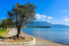 Greek beach on the island of Corfu in the mediterranean. Greek beach on the island of Corfu Kerkyra in the mediterranean sea with sunny weather royalty free stock photos