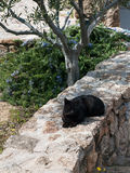 Greek -Black cats - cat sleeping in a garden under the tree. Stock Photo