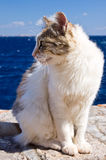 Greek calico cat at wall near sea Stock Photos