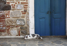 A greek cat. A real greek picture with a gray and white cat in front of a blue door Royalty Free Stock Photos