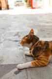 Greek cat in an alley Royalty Free Stock Images