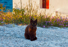 Greek cat - black cat sitting on a  sidewalk Royalty Free Stock Image