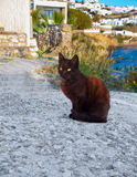 Greek cat - black cat sitting on a  sidewalk next to a flower Royalty Free Stock Photography