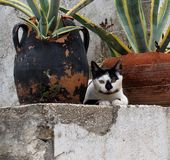 Cats Of Crete Greece Royalty Free Stock Photography