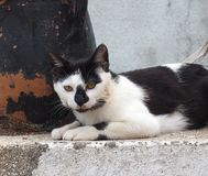 Cats Of Crete Greece Royalty Free Stock Images