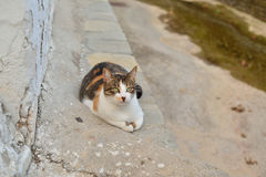 Greek cat. The feline friends are all over Greece just waiting to snap up a tid-bit under the taverna table or find a shady spot to snooze all day...its a cat's Royalty Free Stock Photos