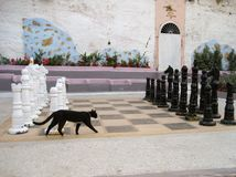 The Greek cat has check mate. Black Greek Greek cat plays chess Stock Images