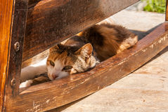 Greek cat hiding from the sun Royalty Free Stock Photo