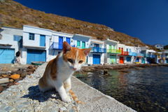Greek cat. Klima, Milos. Cyclades islands. Greece Royalty Free Stock Photography