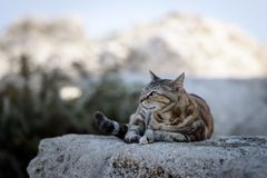 Greek cat is laying on a stone on Rhodes island, Greece Stock Image