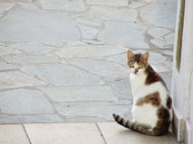 Greek Cat Stock Photo