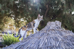 Greek cat relaxed on the beach, Crete Stock Photo