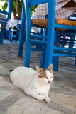 Greek cat in restaurant Stock Photo