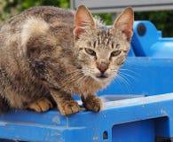 Cats Of Crete Greece Stock Image