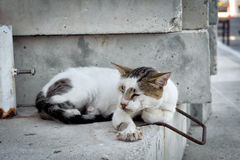 Greek cat is slipping on a wall at Paleochora town on Crete island, Greece Stock Images