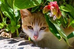 Greek cat under flower, Rhodes, Greece Royalty Free Stock Photography