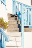 Greek cats - beautiful cats sitting on the stairs at the entranc Royalty Free Stock Photo