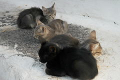 Greek cats Royalty Free Stock Image