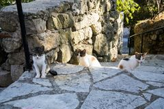 Greek cats from Lefkada island. The feline friends are all over Greece just waiting to snap up a tid-bit under the taverna table or find a shady spot to snooze Royalty Free Stock Images