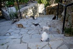 Greek cats from Lefkada island. The feline friends are all over Greece just waiting to snap up a tid-bit under the taverna table or find a shady spot to snooze Stock Photo