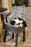 Greek cats. Old town of Rhodes, shops and cats stock images