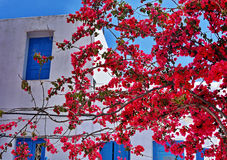 Greek House. Purple flowers of abougainvillea and traditional greek house in Mykonos Stock Images