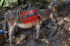 Greek donkey Royalty Free Stock Image