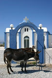 Greek Donkeys. Donkeys waiting in front of a church Stock Image