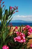 Greek flowers Stock Image