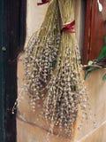 Greek Herbal Tea Royalty Free Stock Photography