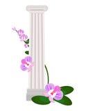 Greek Ionic columns order vintage design Vector illustration. Greek Ionic columns orders Vector illustration floral decor Royalty Free Stock Photography