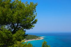 Greek island paradise beach, blue sea and pine tree. Mediterrane. An sea beach, evergreen pine and blue water, Greece island Stock Photos