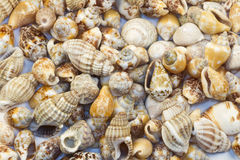 Greek island ,seashells and oysters Royalty Free Stock Photos
