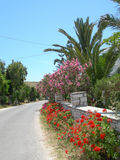 Greek island street scene with flowers. Typical greek island cyclades street scene with stone wall and flowers on island of paros town of logaras Stock Photography