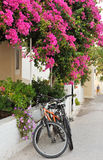Greek island village alley. Scene from a narrow alley from a Greek island village, showing two bicycles leaning against a house covered in colorful flowers Royalty Free Stock Photography