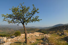 Greek Landscape with Tree Royalty Free Stock Photo