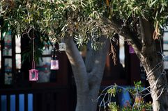 Greek lights decor. Beautiful, spectacular, greek  restaurant near the sea. Olive trees decorated with different colours lights. It makes unforgetable Royalty Free Stock Photography