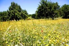 Greek meadow in Spring Stock Photo