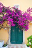 Greek monastery door with flowers. Greek monastery door with beautiful purple flowers Royalty Free Stock Photo