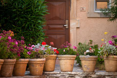Greek motives. Greek garden with beautiful geranium Stock Photos