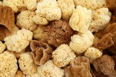 Greek natural sponges Royalty Free Stock Image