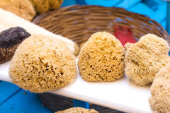 Greek natural sponges for face and body Stock Photography