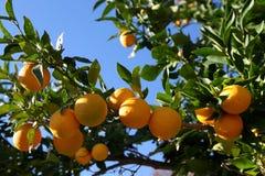 Greek Oranges Royalty Free Stock Images
